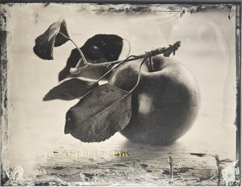 8-Apple-TinType-5138